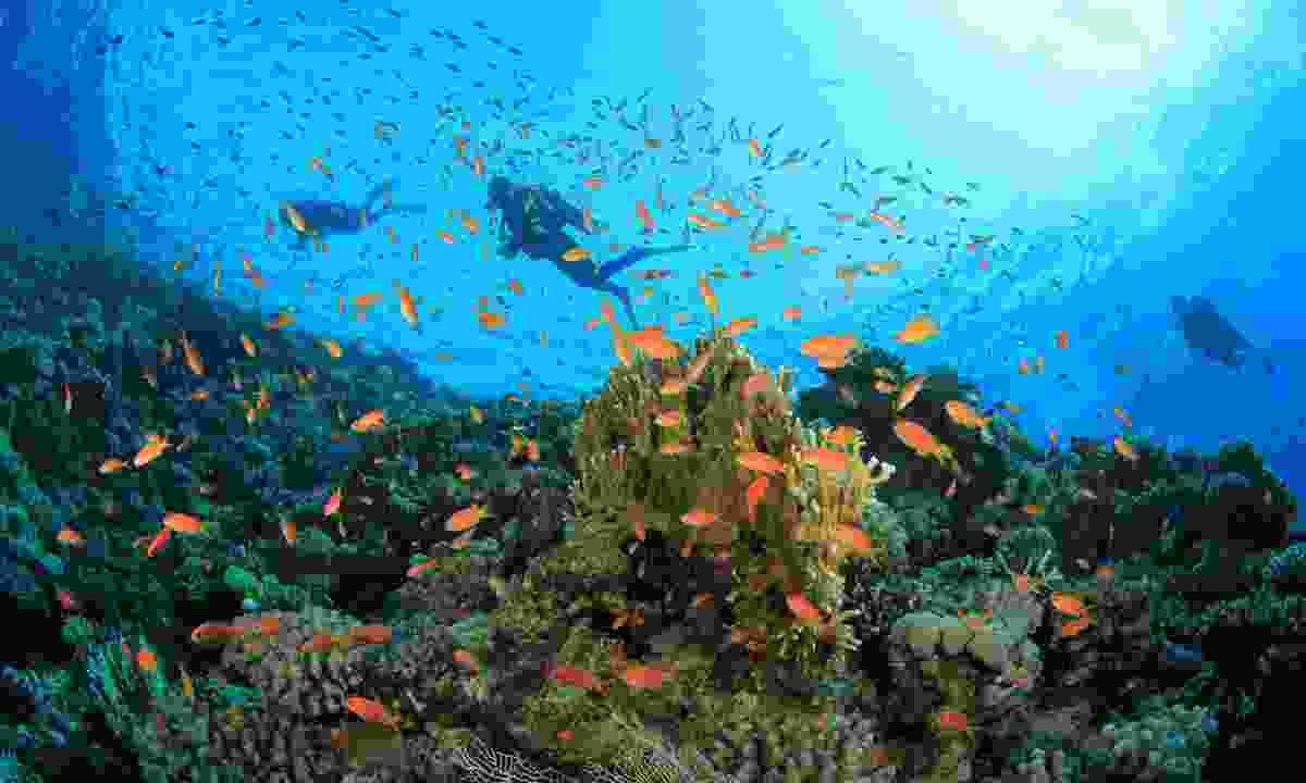 Scuba Divers explore coral reefs (Shutterstock)