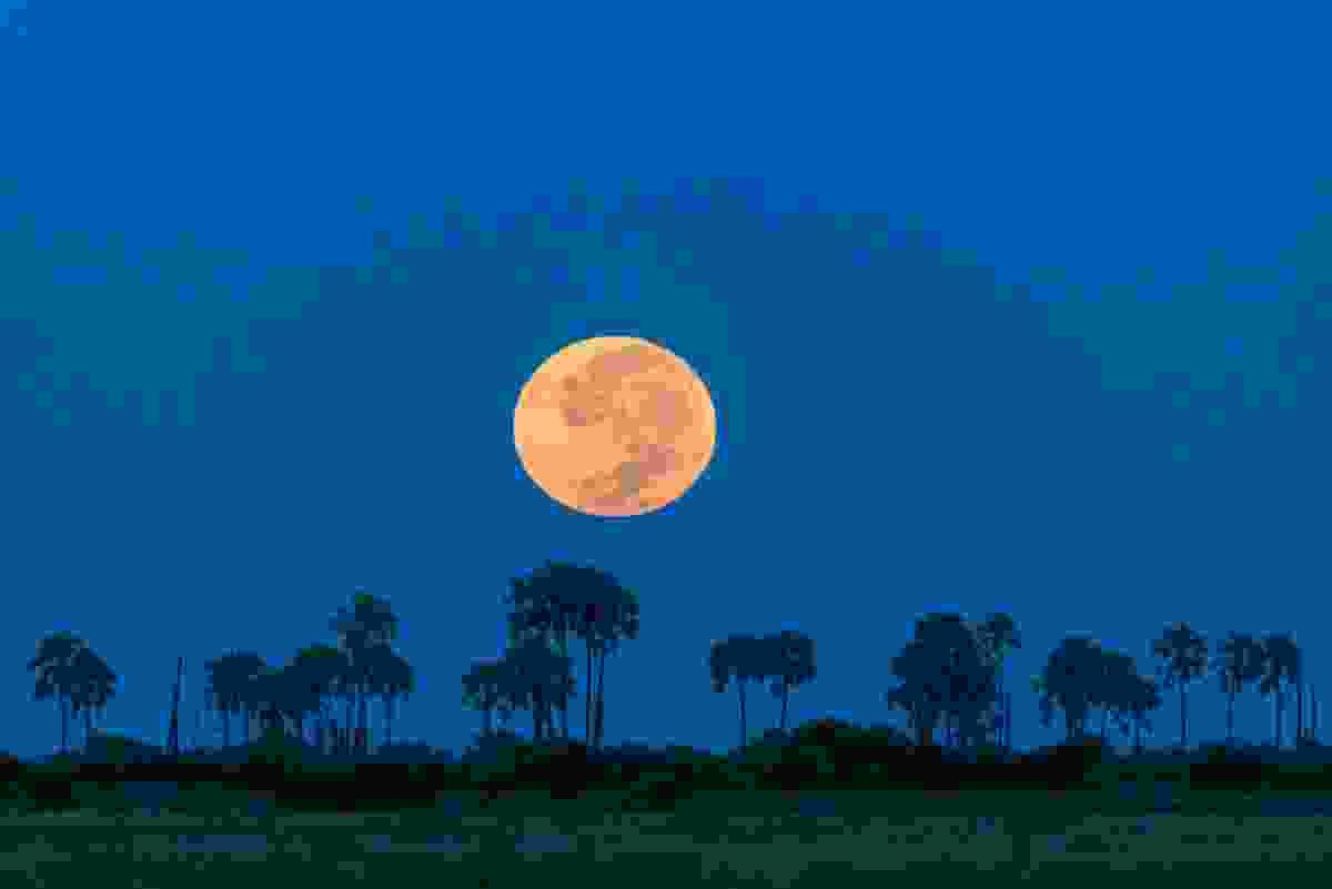 Full moon setting over the Okavango Delta, Botswana (Frans Lanting)
