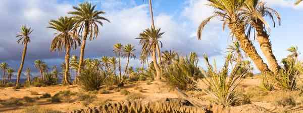 An oasis in Guelmim, Morocco (Shutterstock)