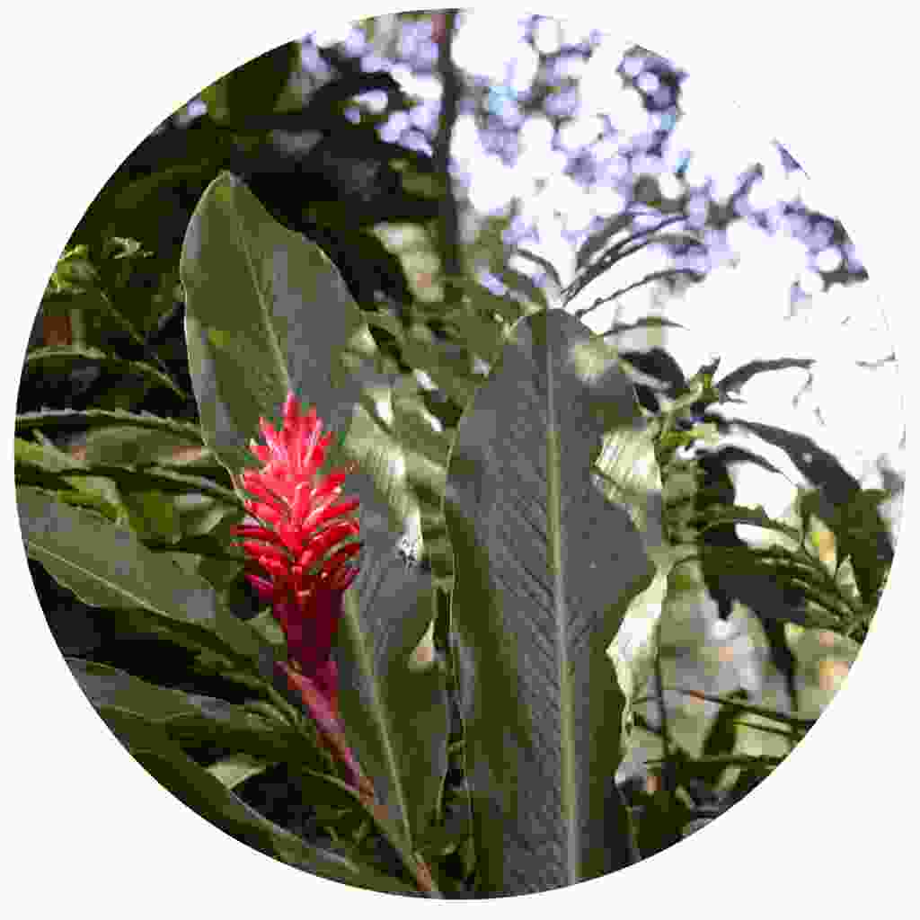 Enjoy studying exotic flowers in the tropical gardens of Papillote (Shutterstock)