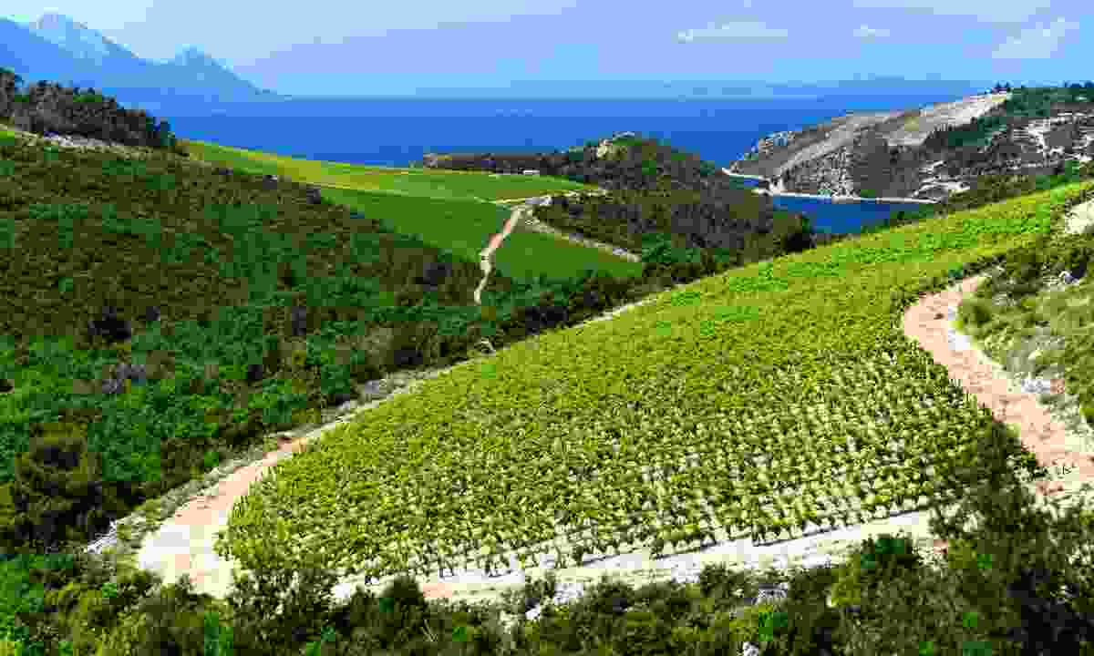 One of the Dalmatia region's many beautiful vineyards (Shutterstock)