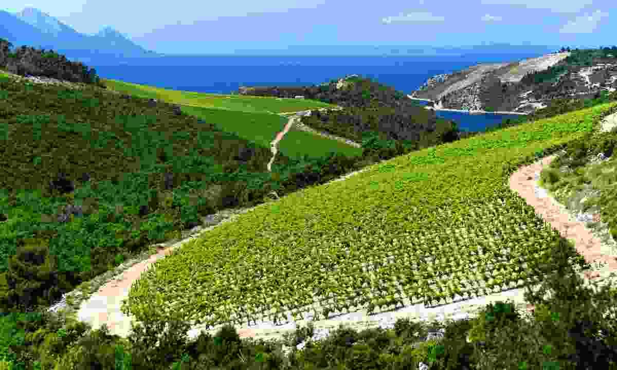 One of the Dalmatia region's many beautiful vineyards (Shutterstock)