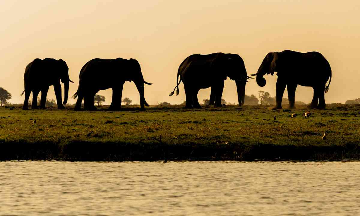 Elephants in Chobe National Park (Shutterstock.com)