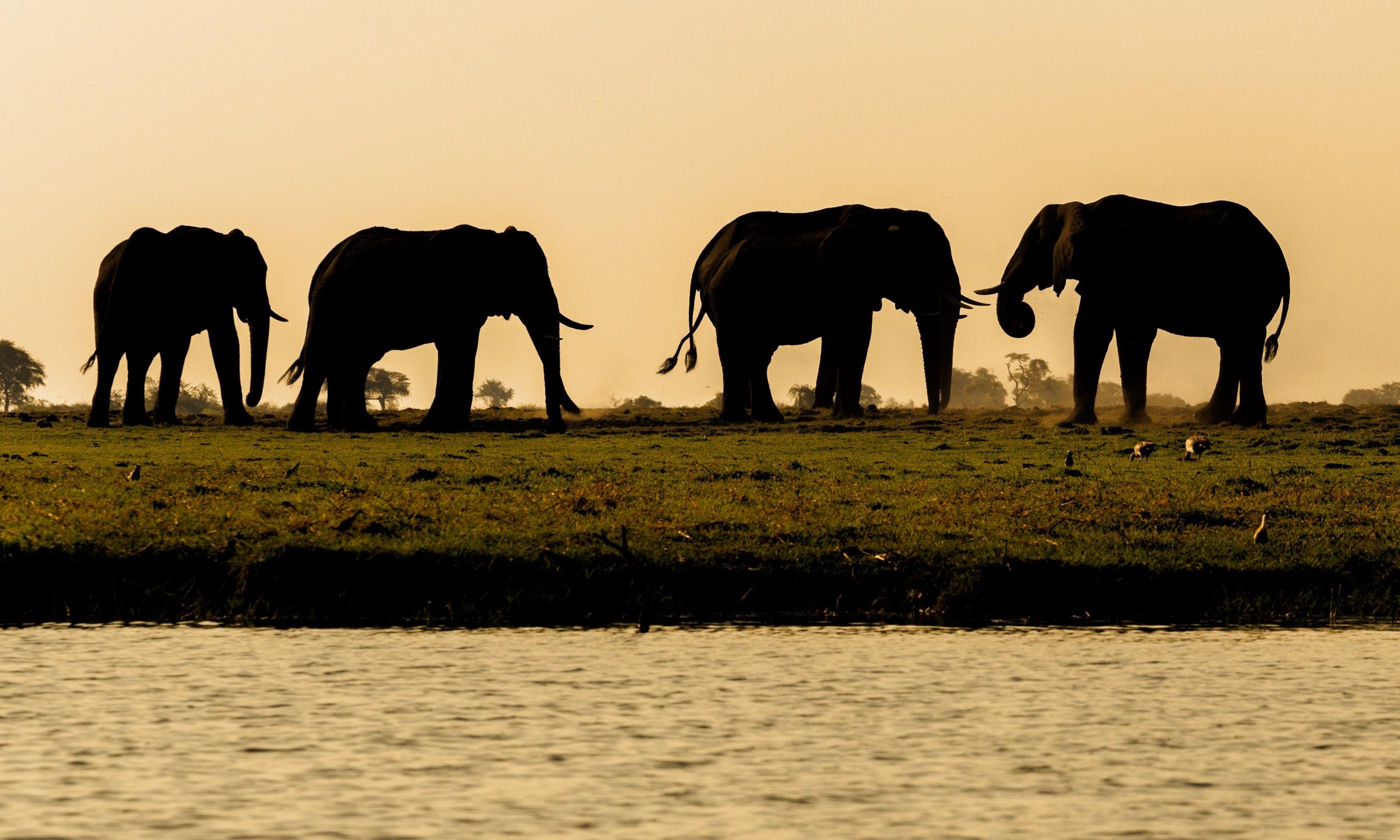 Elephants in Chobe National Park (Shutterstock.com)