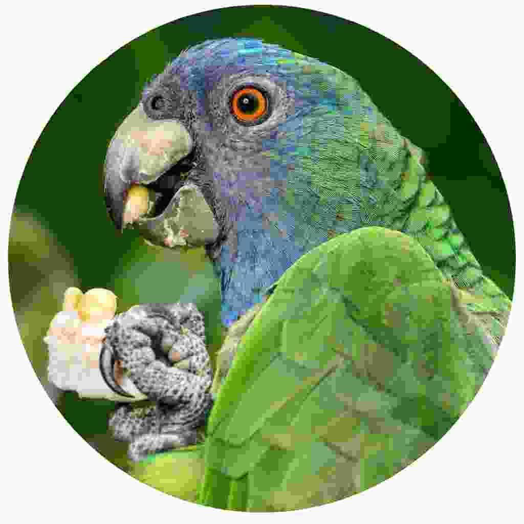 Get up close to the birdlife