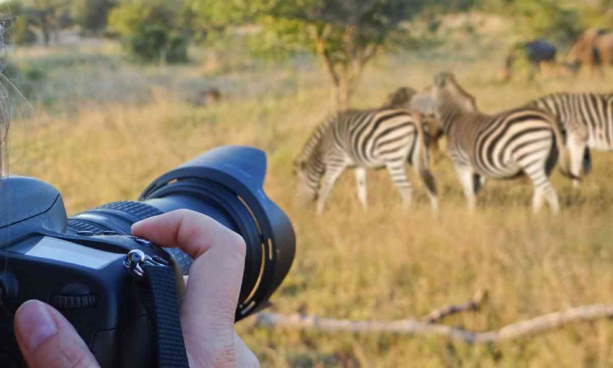Photographing wildlife, South Africa (Shutterstock)
