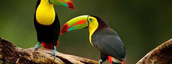 The world's 9 best birding destinations   Wanderlust