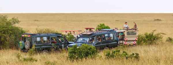 Safari vehicles. (Shutterstock)