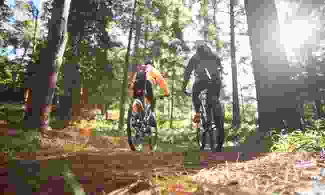 Mountain bike through the forest