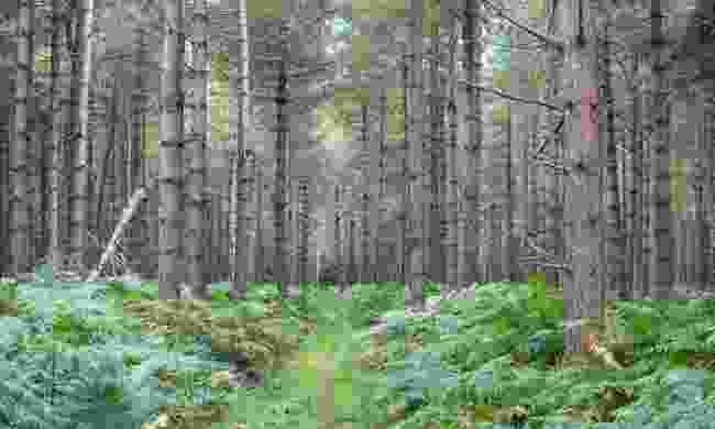 Rendlesham Forest (Shutterstock)