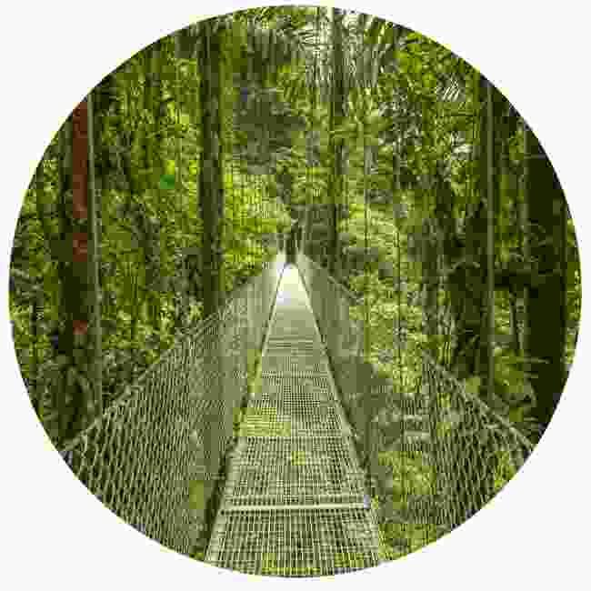 Your rainforest adventure begins... (Dreamstime)