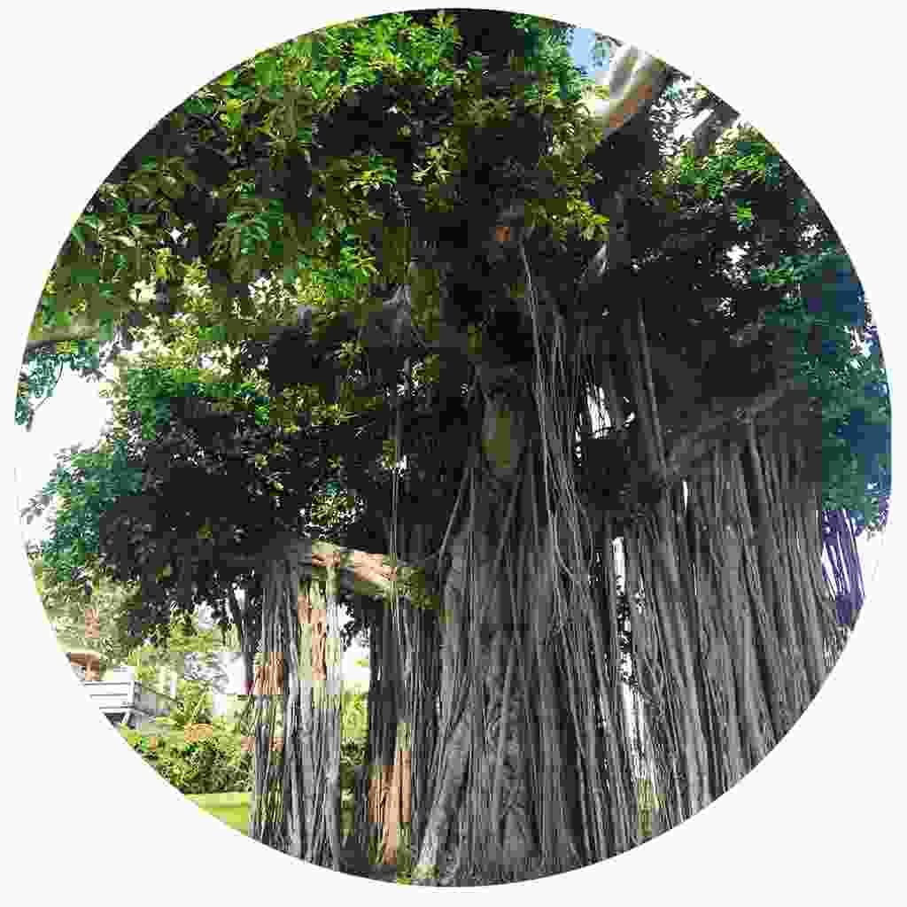 Explore the island's botanical gardens