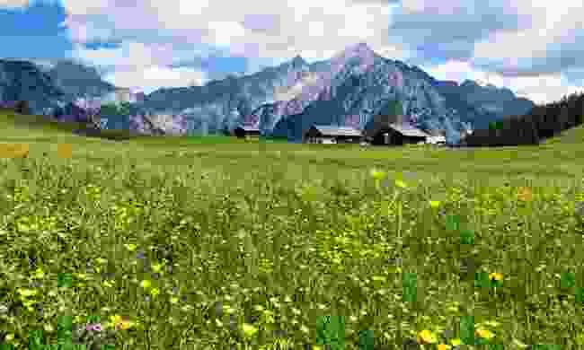 Alpine meadows in the Tirol (Dreamstime)