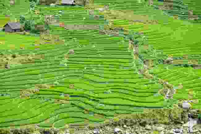 The rice fields of Sa Pa, in Vietnam (Dreamstime)