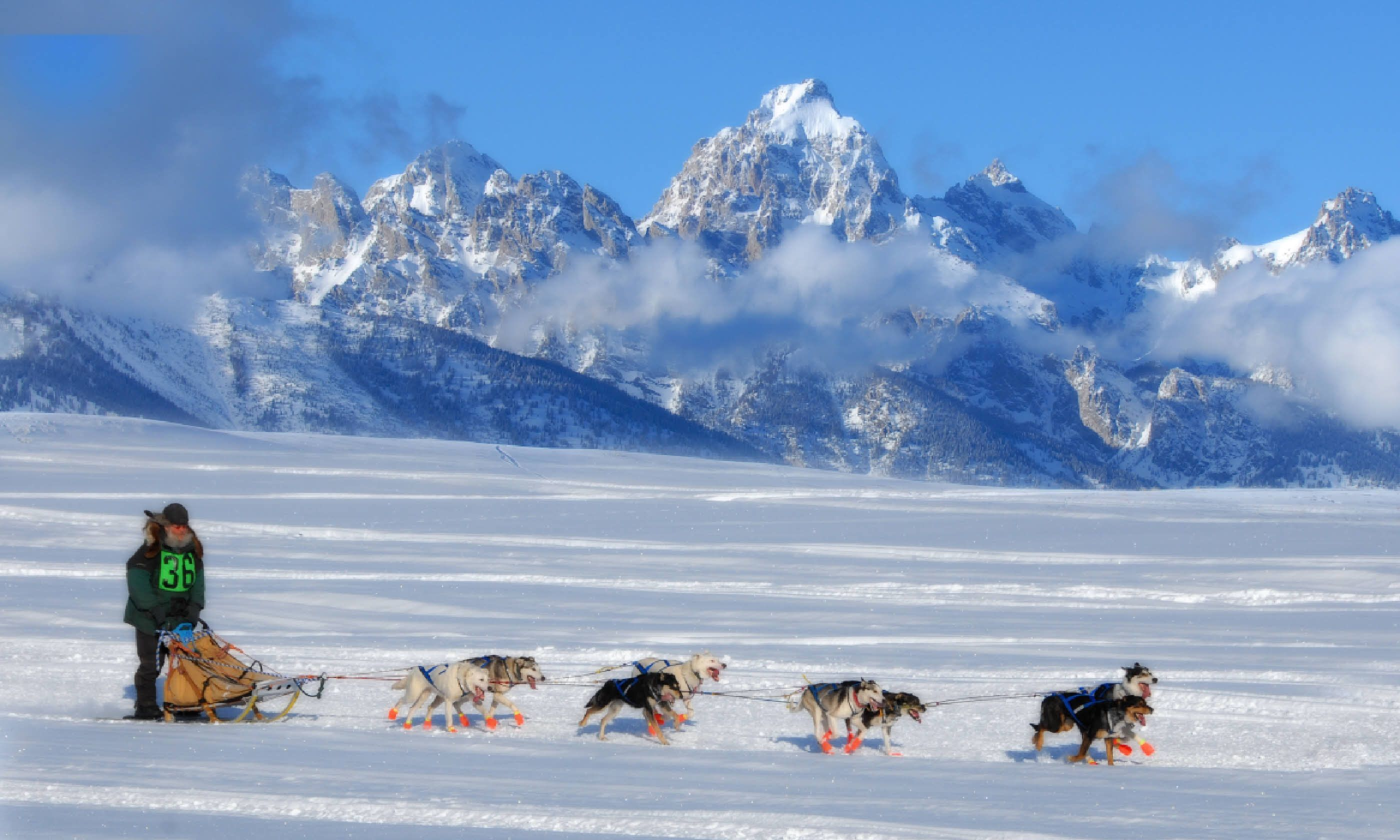 Dog sled team, Iditarod (Shutterstock)