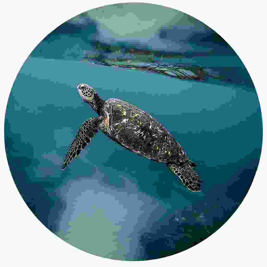Spot turtles at Champagne Reef