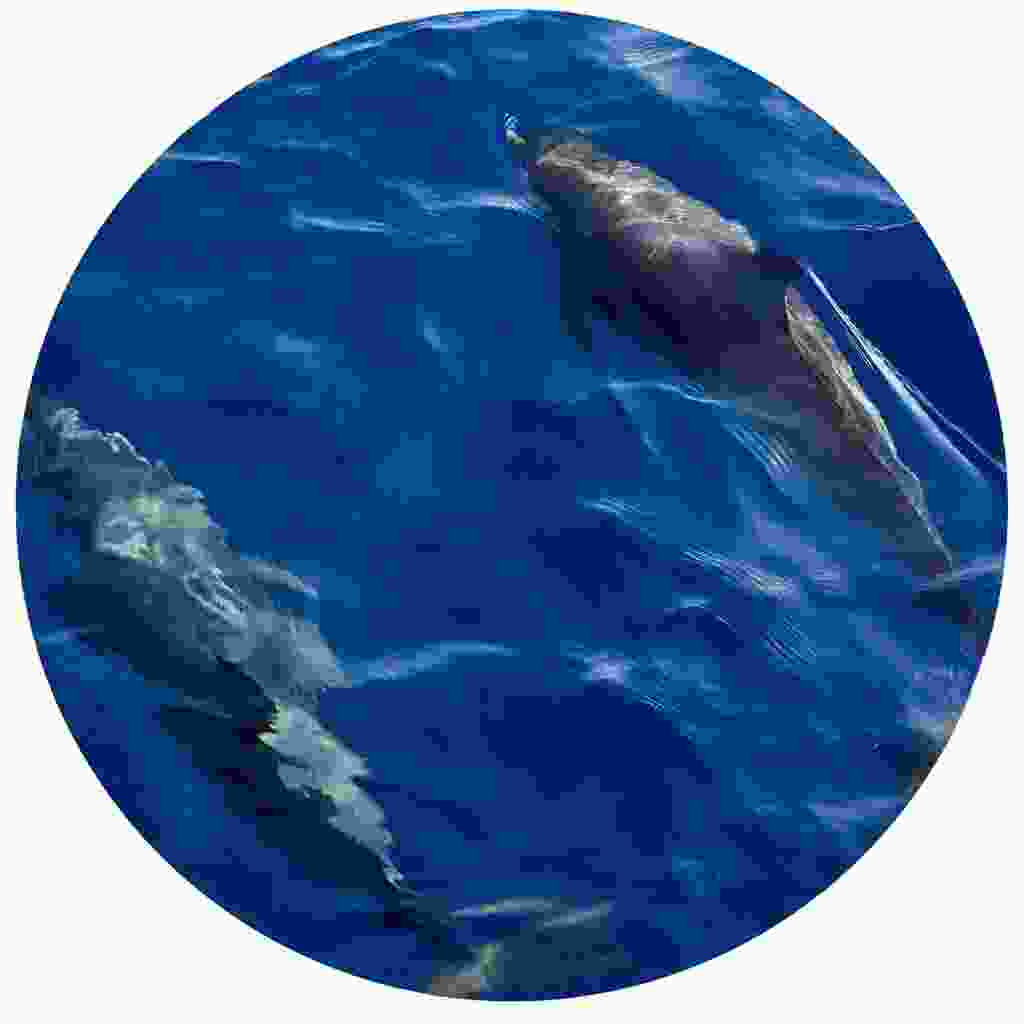 Look out for dolphins in the ocean