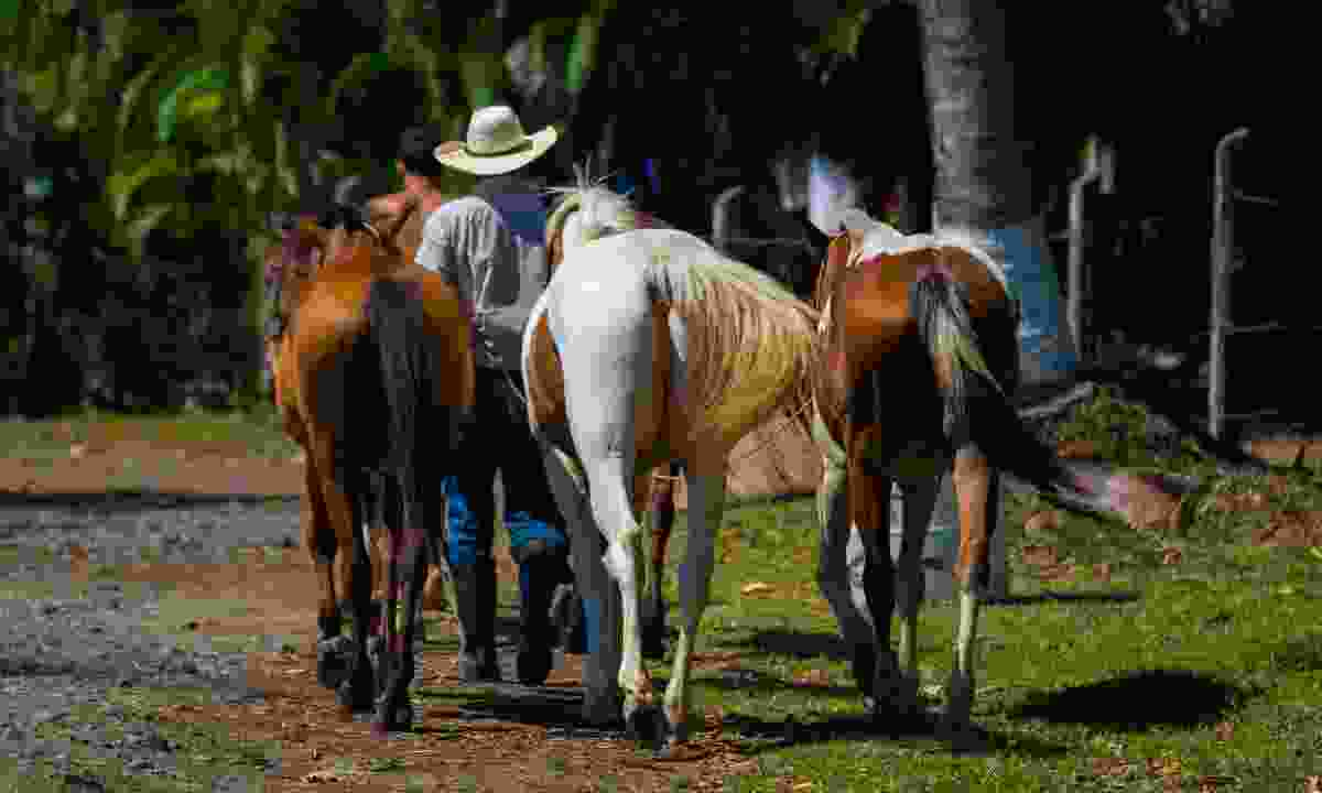 Horses in Costa Rica (Shutterstock)