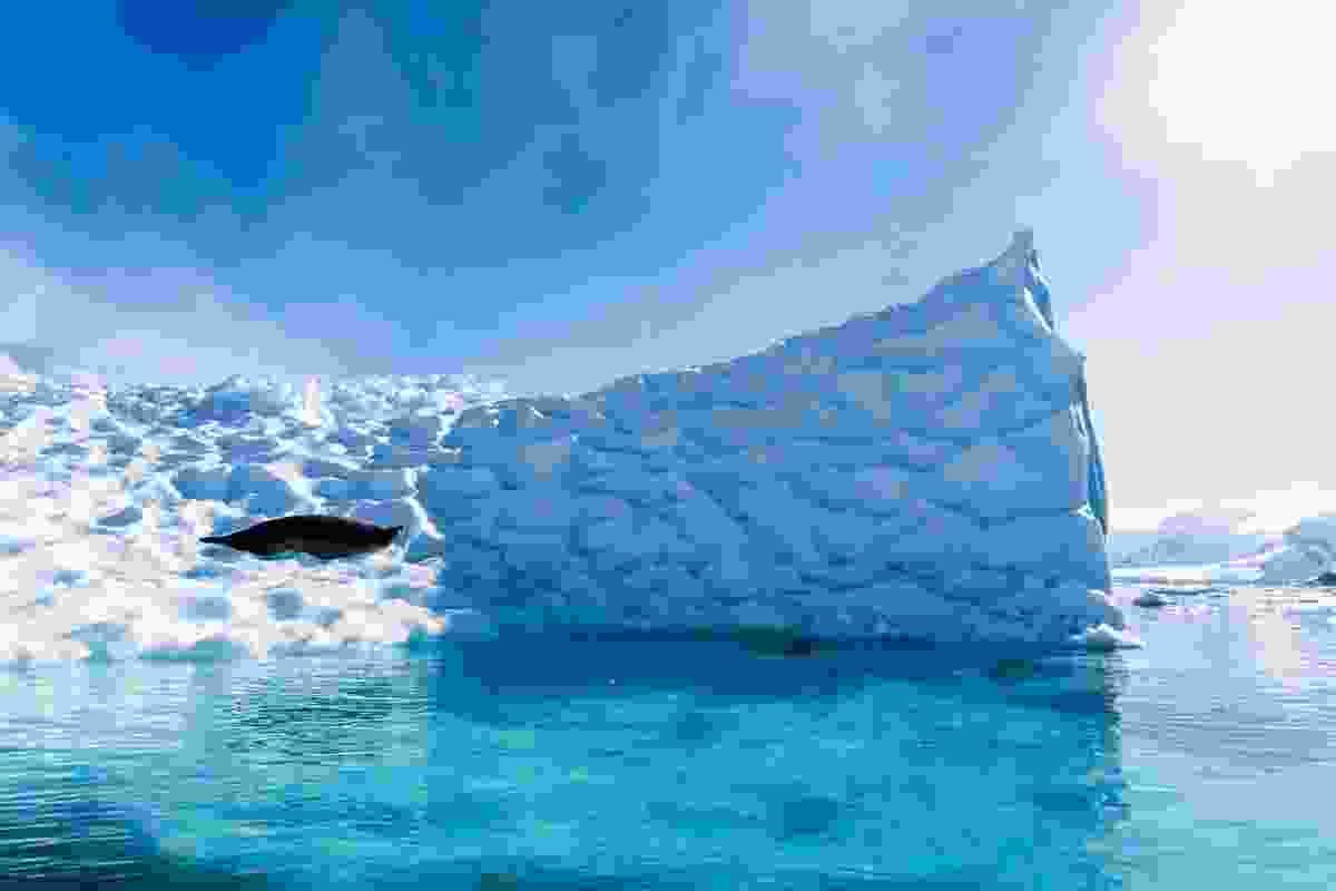 Seal on iceberg (Alesha Bradford)