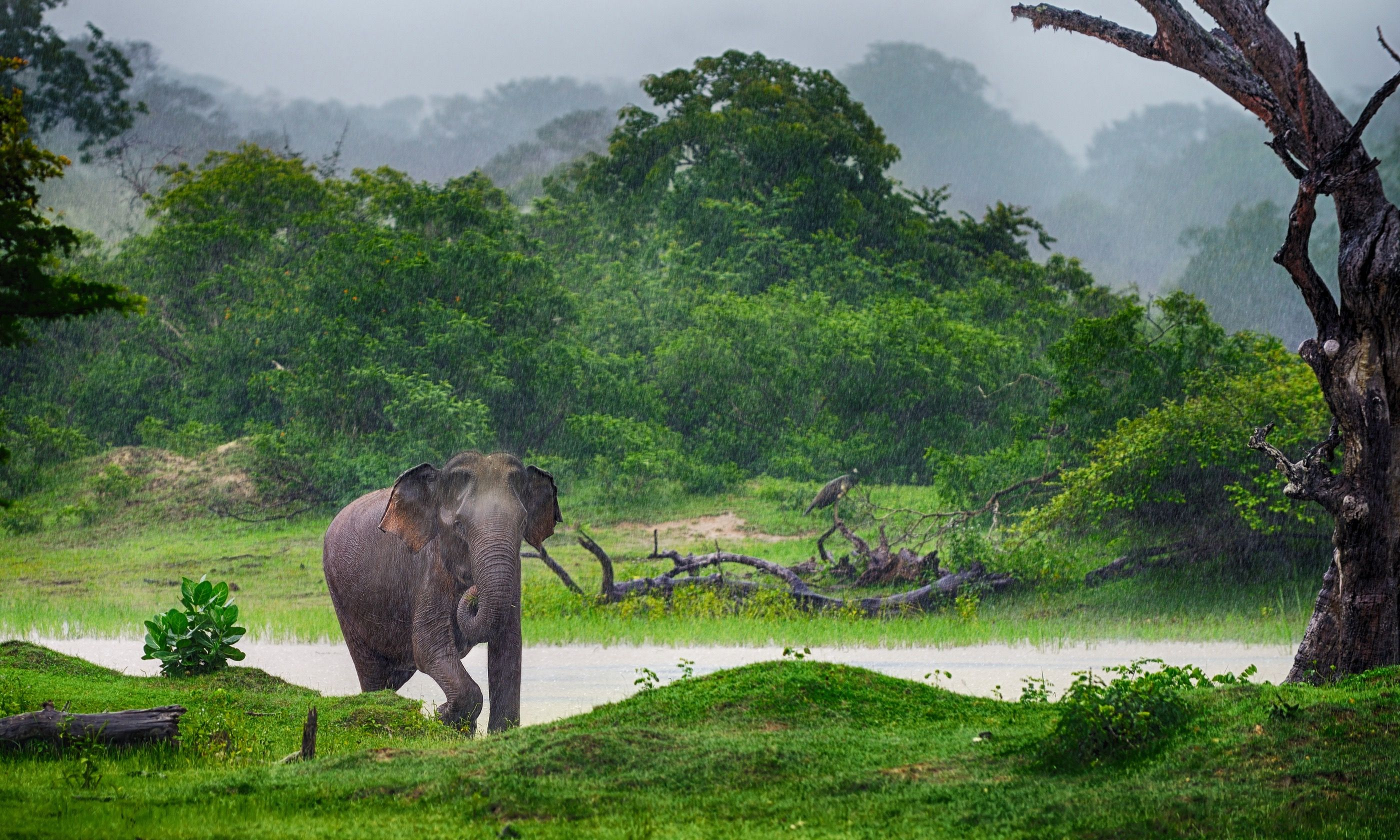 Elephant in the wilds of Sri Lanka (Shutterstock.com)
