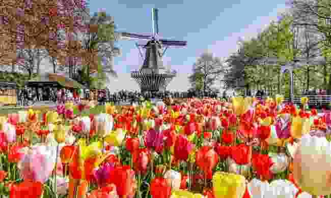 Keukenhof Gardens from The Hague (Klook)