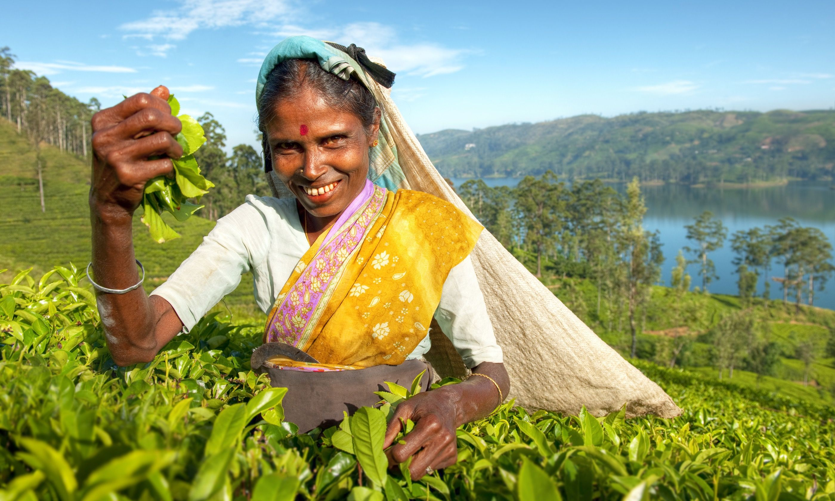Picking tea in Sri Lanka (Shutterstock.com)
