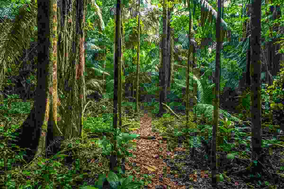 The Amazon rainforest in Manu National Park, Peru (Shutterstock)