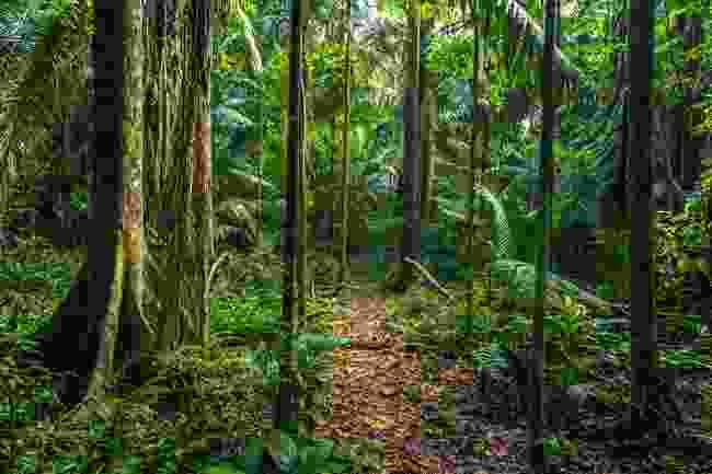 The Amazon rainforest in Manu National Park, Peru (Shutterstock)