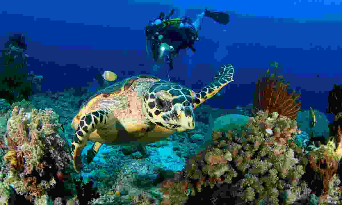 Diving with a turtle in Raja Ampat (Shutterstock)