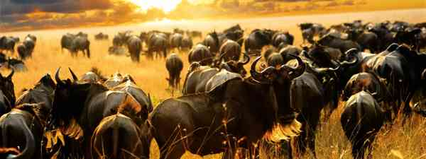 The great migration: What working as a safari guide and wildlife tracker is like (Dreamstime)