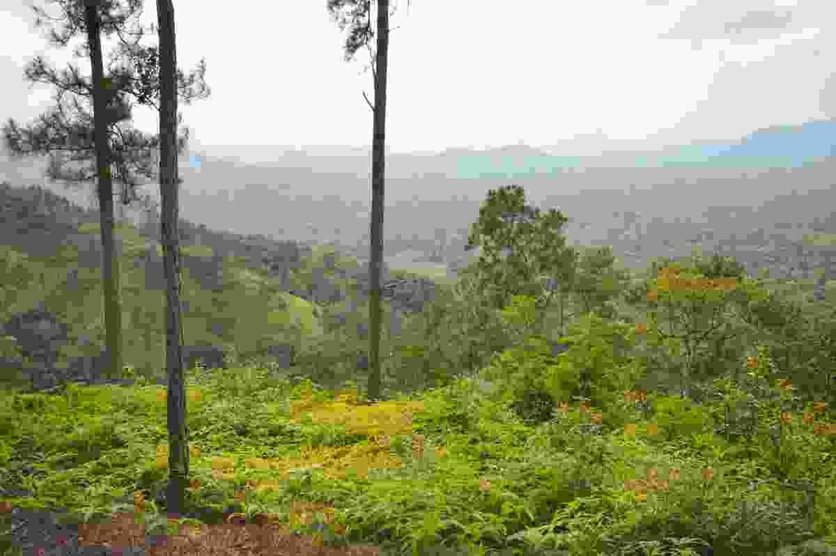The lush landscape surrounding Cockscomb Basin Wildlife Sanctuary (Shutterstock)