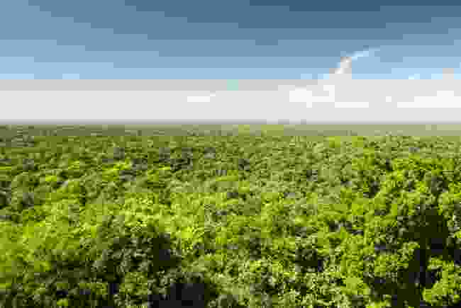 The view from above the Calakmul Biosphere Reserve, Mexico (Shutterstock)