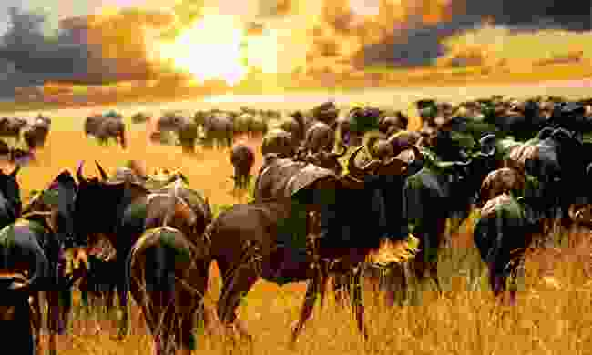 People never react the same to the Great Migration (Shutterstock)