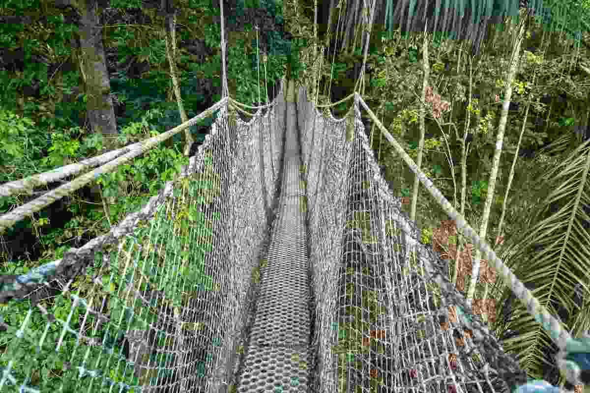 The Iwokrama crossing is probably *not* where you'll see jaguars, but go deeper into the forest... (Shutterstock)