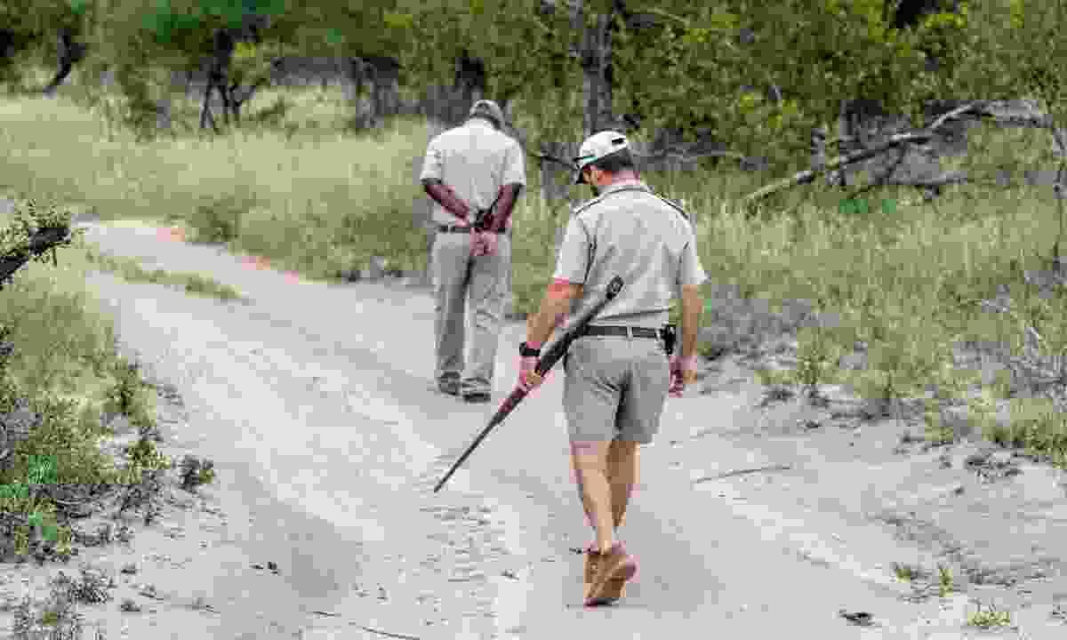 Animal trackers in Zimbabwe (Shutterstock)