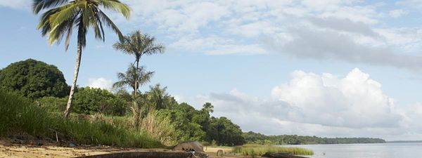 064cda00cab Dugout canoe on the shore of the Marowijne River near the village of  Bigiston, Suriname