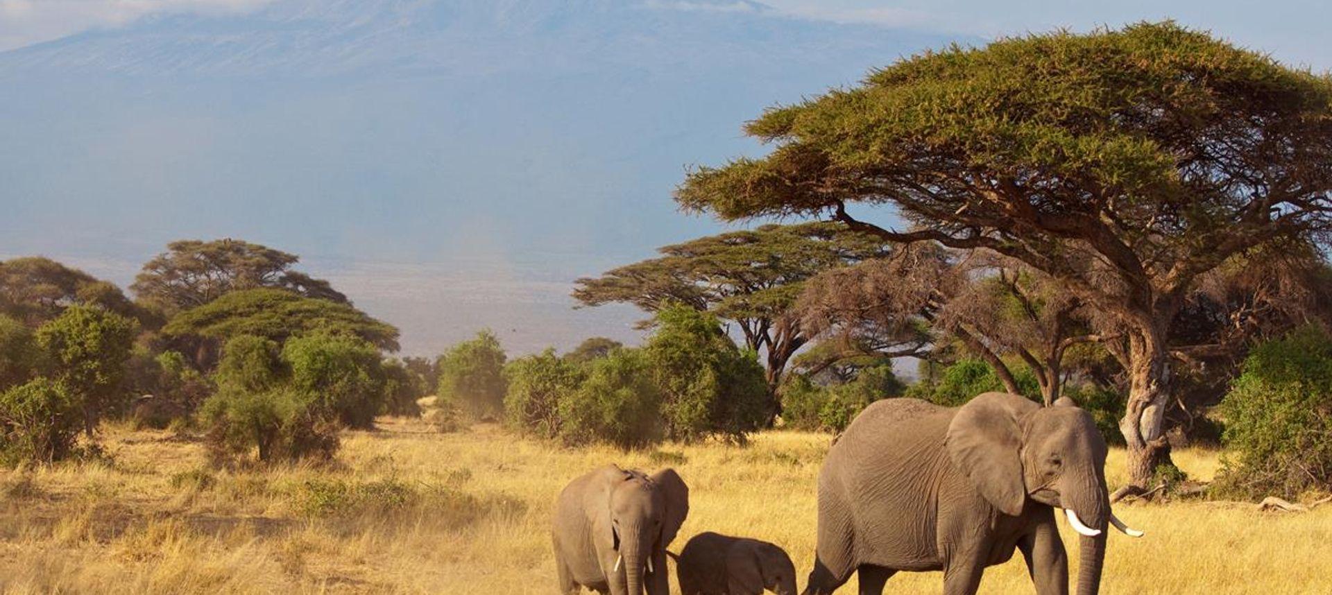 Lions in Tanzania (Saadani Safaris)