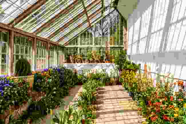 A greenhouse of flowers in Guernsey (Shutterstock)