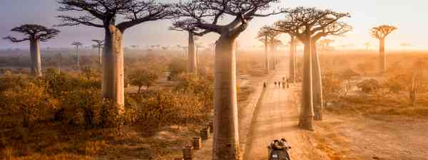 Avenue of Baobabs in Madagascar (Shutterstock)