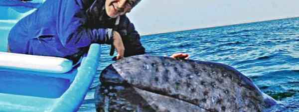 Nigel Marvin meets a whale (Channel 5)