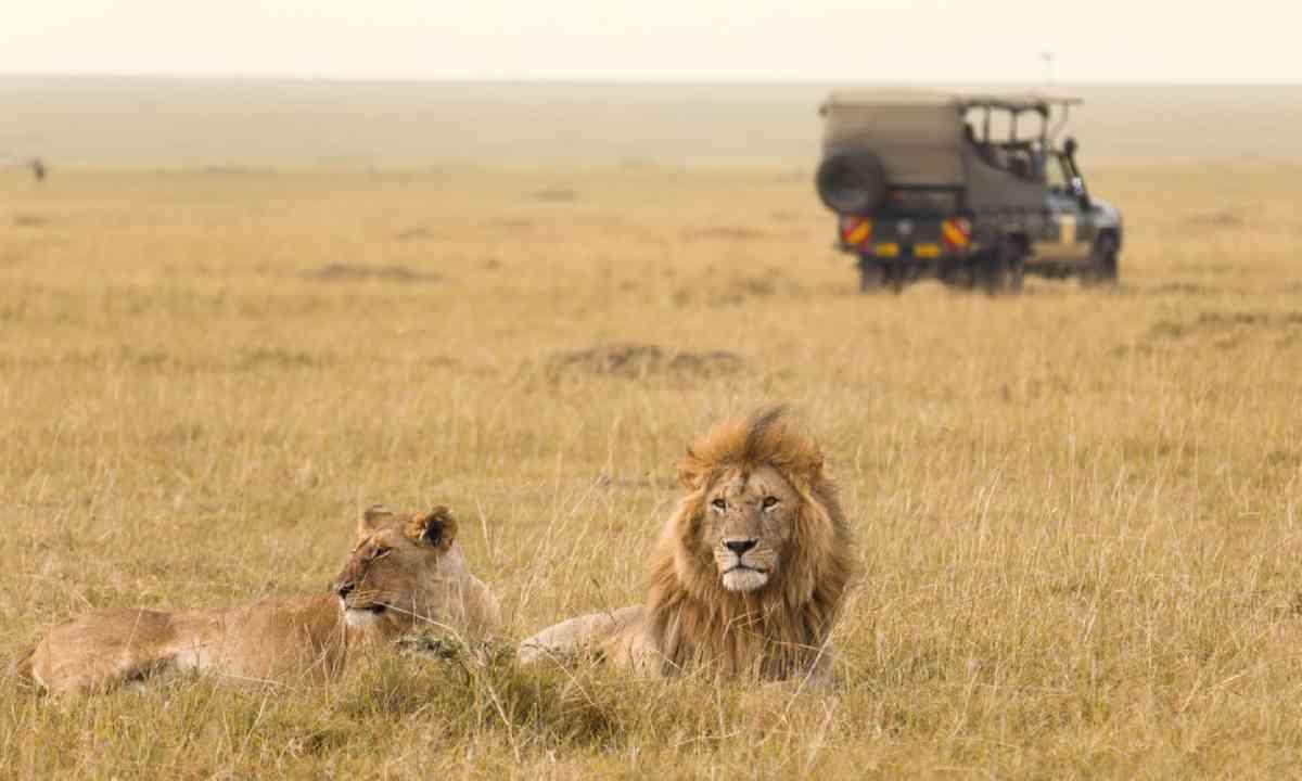 Jeep Safari in Kenya (Shutterstock)
