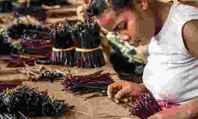 A Malagasy woman preparing vanilla (Shutterstock)