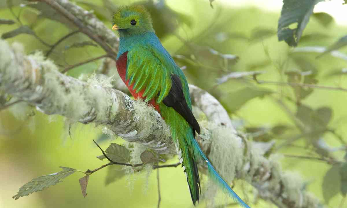 Quetzal in Costa Rica (Shutterstock)
