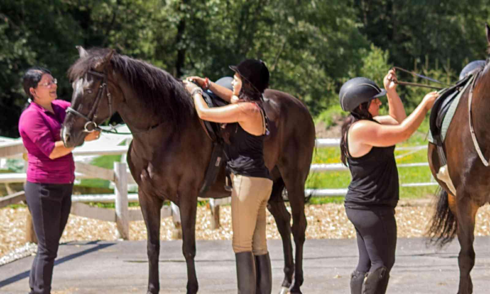 Horses at Trattlerhof (trattlerhof.at)