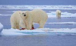 Svalbard (Spitsbergen)
