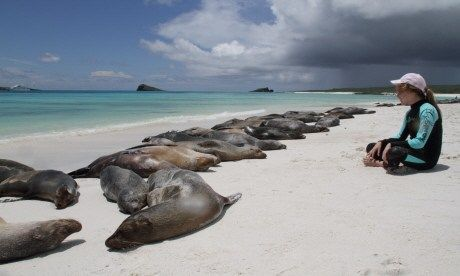 Watching seals in the Galapagos (Will Gray)