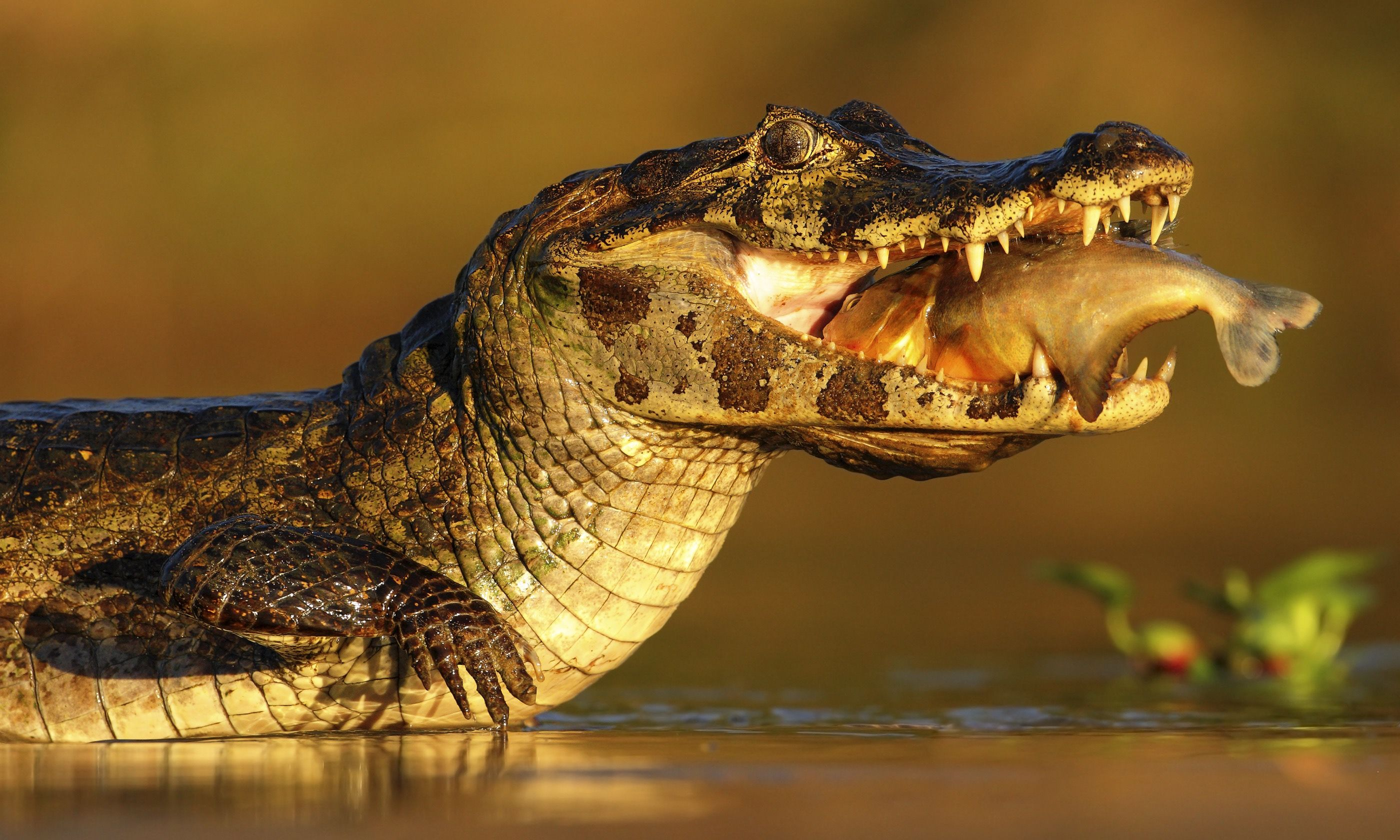 Dinner time in the Pantanal (Dreamstime)
