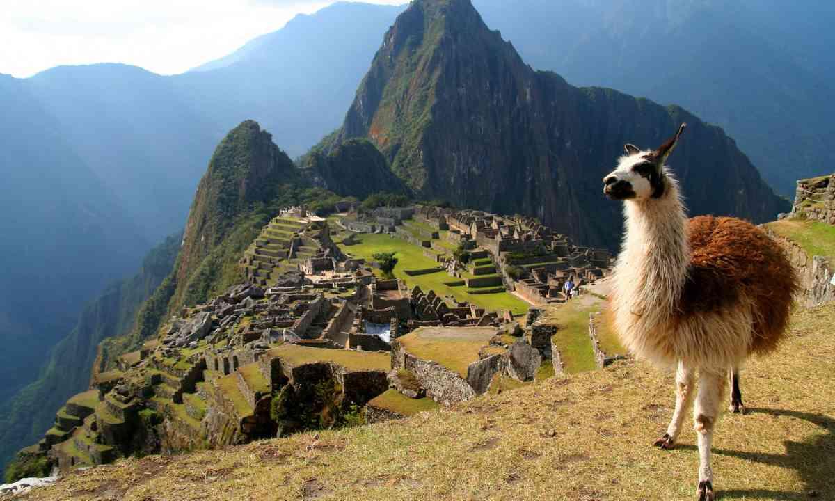 A lama at Machu Picchu (Dreamstime)