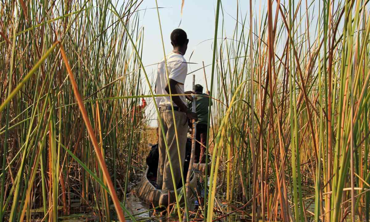Mokoro safari in the Okavango Delta (Dreamstime)
