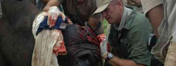 Dr William Fowlds tends a wounded rhino